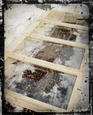 Cold-Frame-1