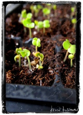 Seedlings-Mar-2011