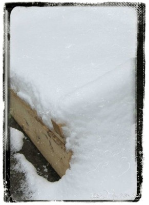 Cold-Frame-SNOW-2