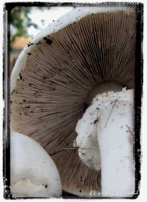 Mushroom-F