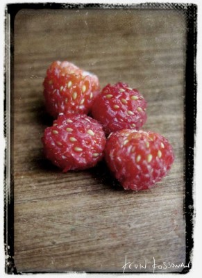 Wild-Strawberries-Late-June