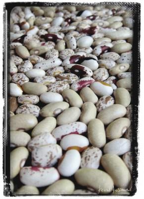 Dry-Beans-1