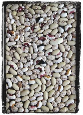 Dry-Beans-2
