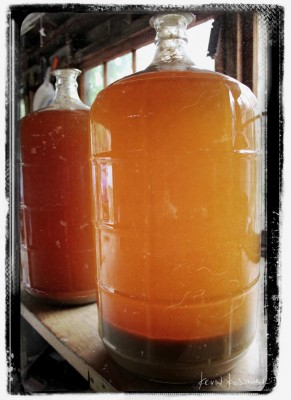 Apple Carboys
