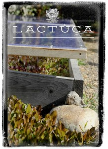 Lactuca Urban Farm